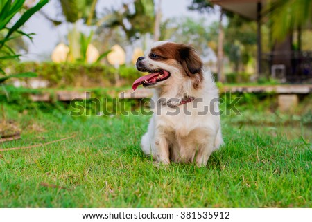 Cute sisu dog
