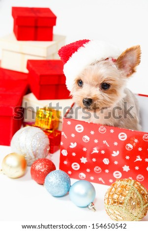 Cute sitting Yorkshire Terrier puppy dog in a Christmas - Santa hat,Present boxes Isolated on a white background - stock photo
