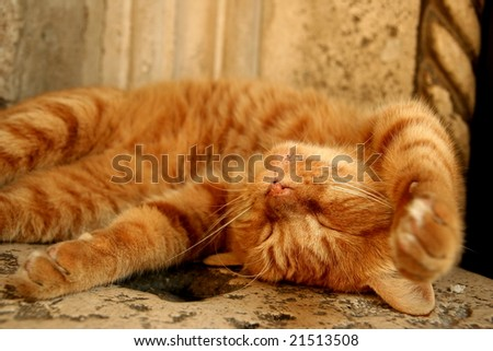 Cute sleeping kitten - stock photo