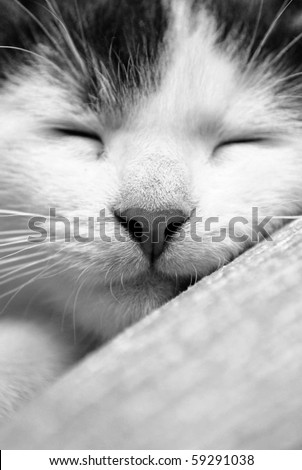 cute sleeping kitten in black and white - stock photo