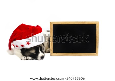 Cute sleeping puppy in a Christmas - Santa hat with blank blackboard. Isolated on a white background - stock photo