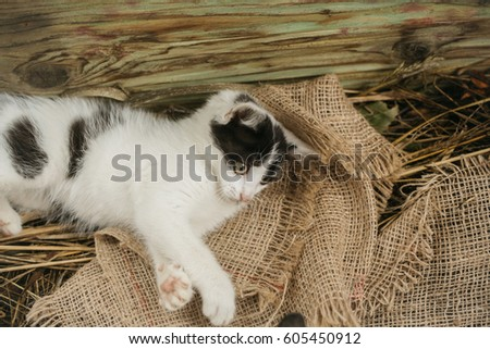 Cute small cat, kitten, domestic pet with fluffy fur, lying on sackcloth in natural hay on wooden background