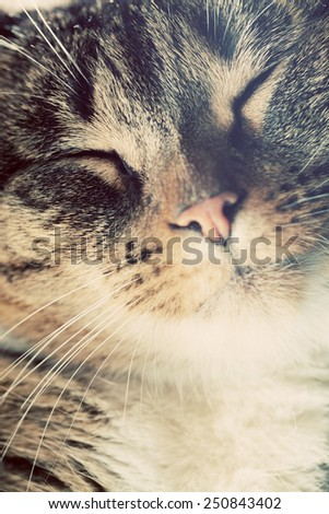 Cute small cat portrait. Eyes closed in sleepy, happy time. Adorable kitten series. - stock photo