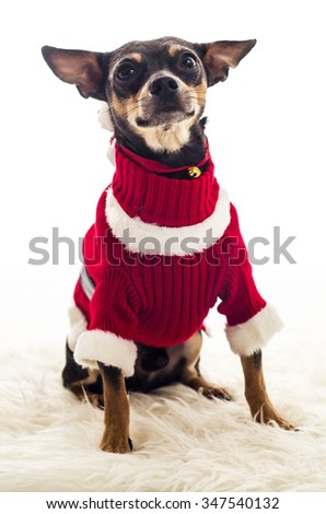 Cute small dog in Xmas costume