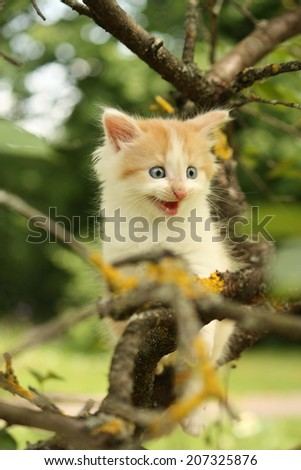 Cute small kitten climbing tree and meowing funny  - stock photo
