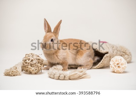 Cute small red easter bunny in knitted hat with decoration braided balls on homogenous off white background - stock photo