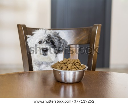 cute small white dog with full bowl of food on the kitchen table.Hungry dog - stock photo