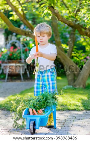 Cute smiling kid boy eating and picking carrots in domestic garden. child gardening outdoors. Healthy organic vegetables as snack for kids and kindergarten children - stock photo