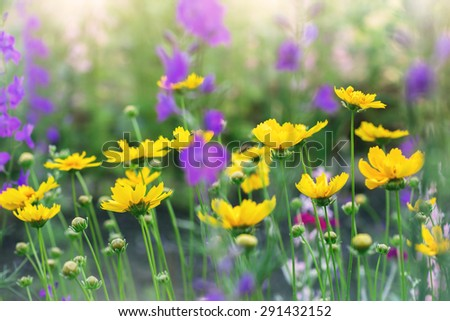 cute soft yellow flowers, blooming in a garden - stock photo