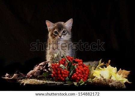 Cute somali kitten on the black background with autumn composition from leaves