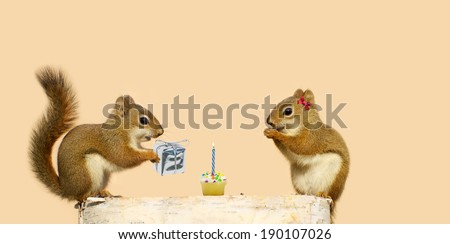 Cute squirrels on a log with the little male giving his sweetheart a birthday cupcake with a candle, and a shiny wrapped gift. Part of a series.  - stock photo