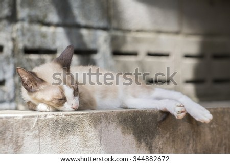 Cute stray cat sleeping on the wall.