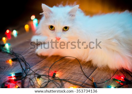 cute sweet white cat with interest looking at christmas colorful garland, holiday  - stock photo