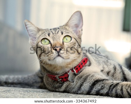 Cute tabby cat lay down on the floor and smiling - stock photo