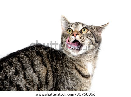 Cute tabby cat licking its chops on white background - stock photo