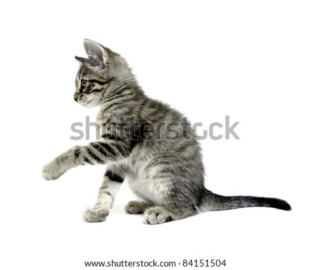 Cute tabby cat reaching up and playing with rope on white background