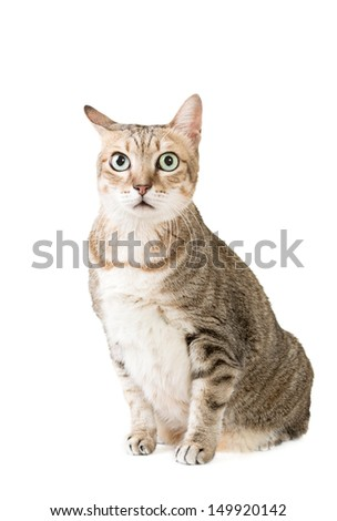 Cute tabby cat with curious expression, full length portrait isolated on white background. - stock photo