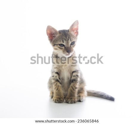 Cute tabby kitten isolated on over white background - stock photo