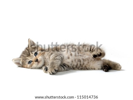 Cute tabby kitten laying down on white background - stock photo