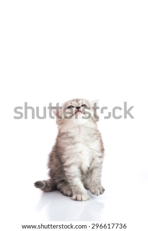 Cute tabby kitten looking up with copy space on top,white background isolated - stock photo