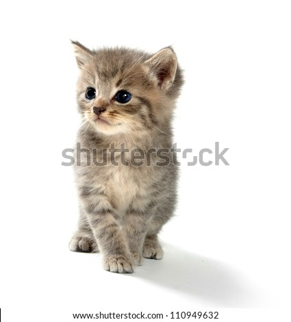 Cute tabby kitten on white background - stock photo