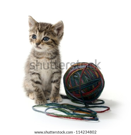 Cute tabby kitten on white background with ball of yarn - stock photo