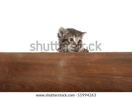 Cute tabby kitten peeking over an old board on white background - stock photo