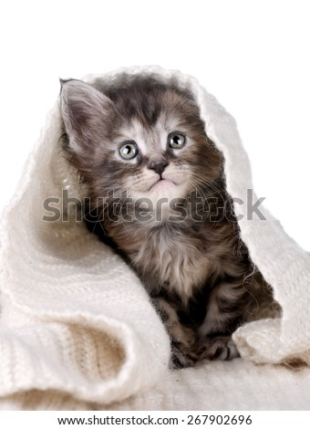 Cute tabby kitten playing hiding in a blanket - stock photo