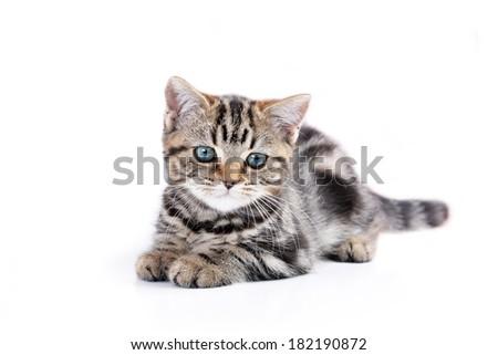 Cute  tabby kitten plays with  ball of yarn - stock photo
