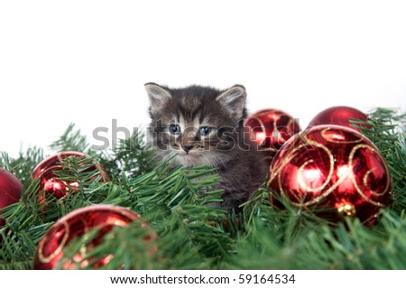 Cute tabby kitten sitting in Christmas decorations