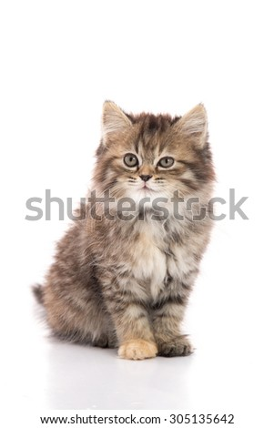 Cute tabby kitten sitting on white background isolated - stock photo