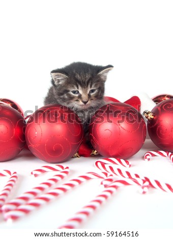 Cute tabby kitten with Christmas decorations on white background - stock photo