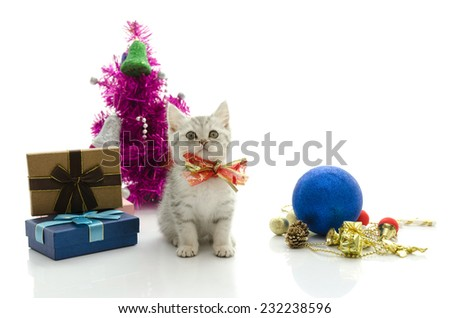 Cute tabby kitten with present on white background isolated - stock photo