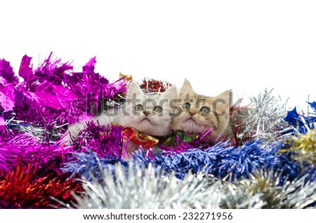 Cute tabby kittens sitting in colorful tinsel on white background - stock photo