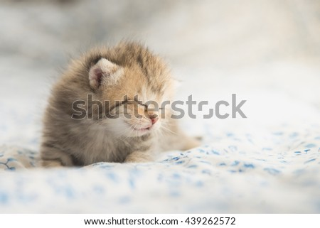 Cute tabby kittens sleeping on bed - stock photo