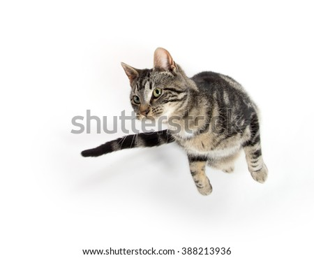 Cute tabby kitty jumping in the air isolated on white background - stock photo