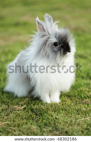 Cute Teddy Bear Rabbit On Grass Field - stock photo