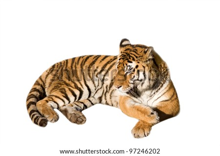 Cute tiger cub - isolated on white background - stock photo