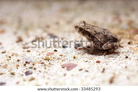 Cute Tiny Toad Sitting on Concrete - stock photo