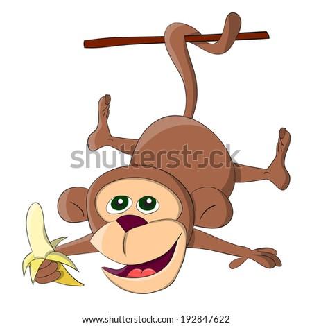 Cute unusual hanging monkey with banana  - stock photo