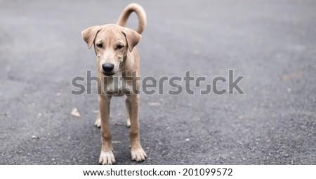 Cute watch dog - stock photo