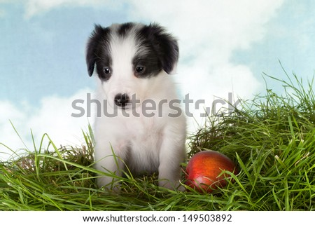 Cute 5 week old border collie puppy on grass - stock photo