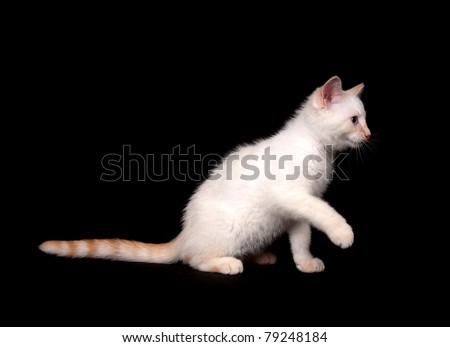 Cute white cat playing on black background