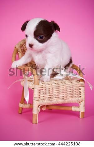 Dog Relaxing Under House Logo