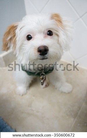 Cute white dog