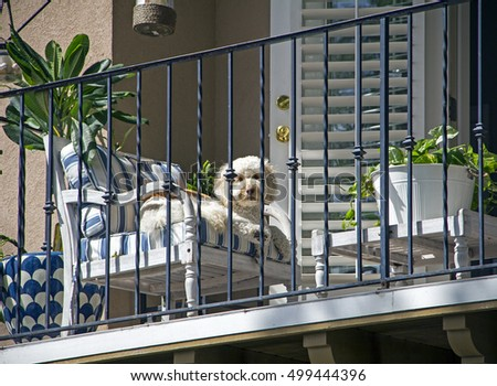 Cute white dog hanging out in the sun on a balcony