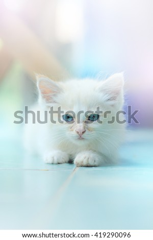 Cute white kitten on the floor.select focus.soft focus the field for background. - stock photo