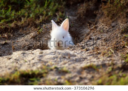 Cute white Little Rabbit peeking out of hole. - stock photo
