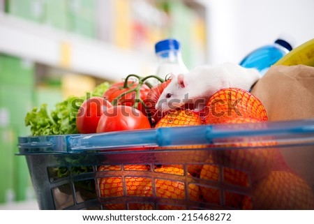 Cute white mouse sniffing fresh vegetables in a shopping basket at supermarket. - stock photo