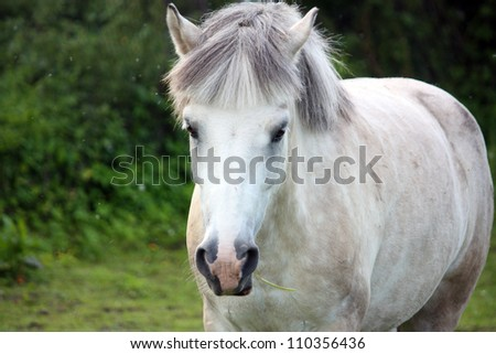 Cute white pony portrait in summer